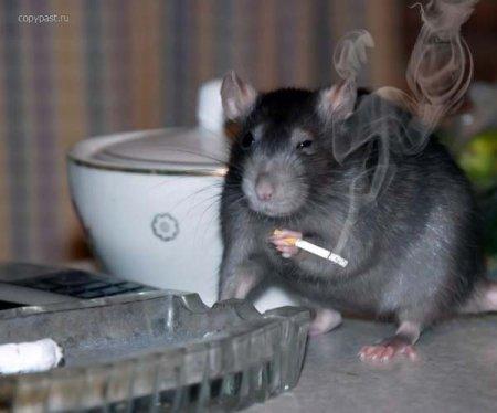 Кошки обебошки- ну, да- я крыса, и что? Сейчас докурю и свалю!