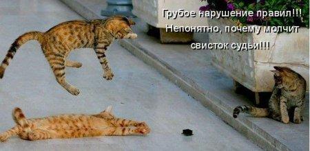 Кошки обебошки
