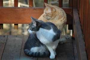 Кошки- обебошки - очень смешные кошки.