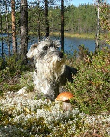 Мисс Собака-Улыбака 2011
