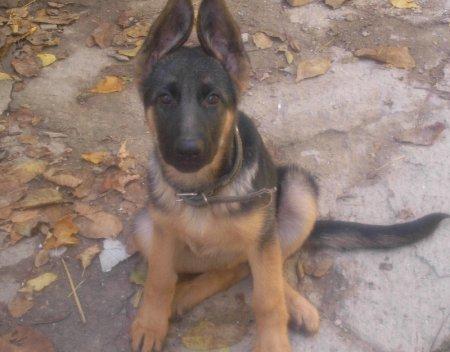 Мисс Осень Собака-Улыбака 2011