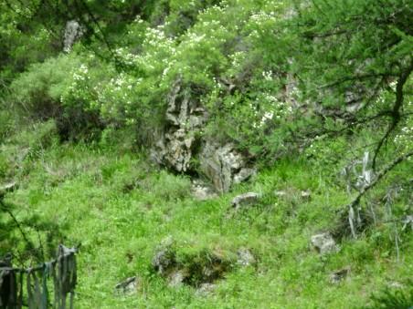 Горный Алтай, живые камни